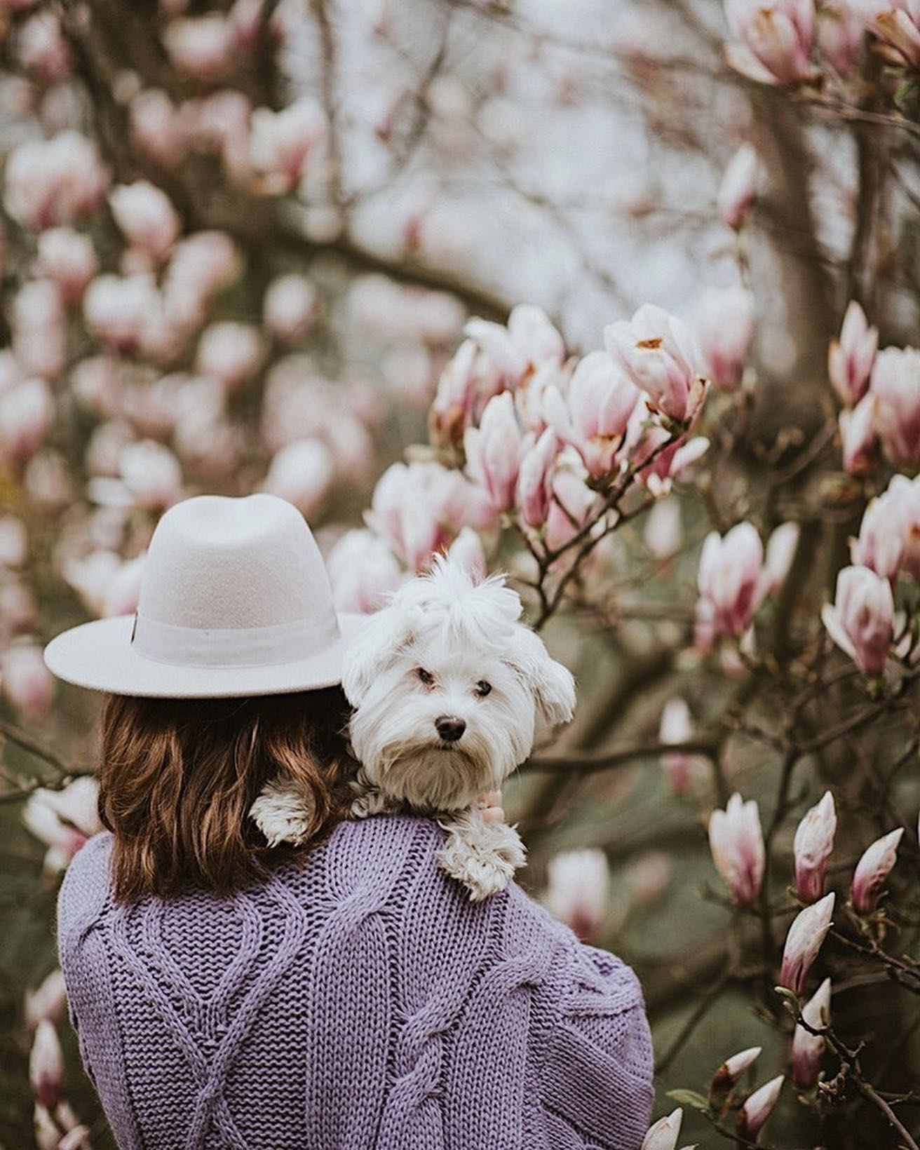 Jestem tymi zdjęciami zachwycona! Nasz lawendowy kardigan w sesji @monikamamon 💜💜💜 A to tego piesio i magnolie!!! Cudownie 🌸