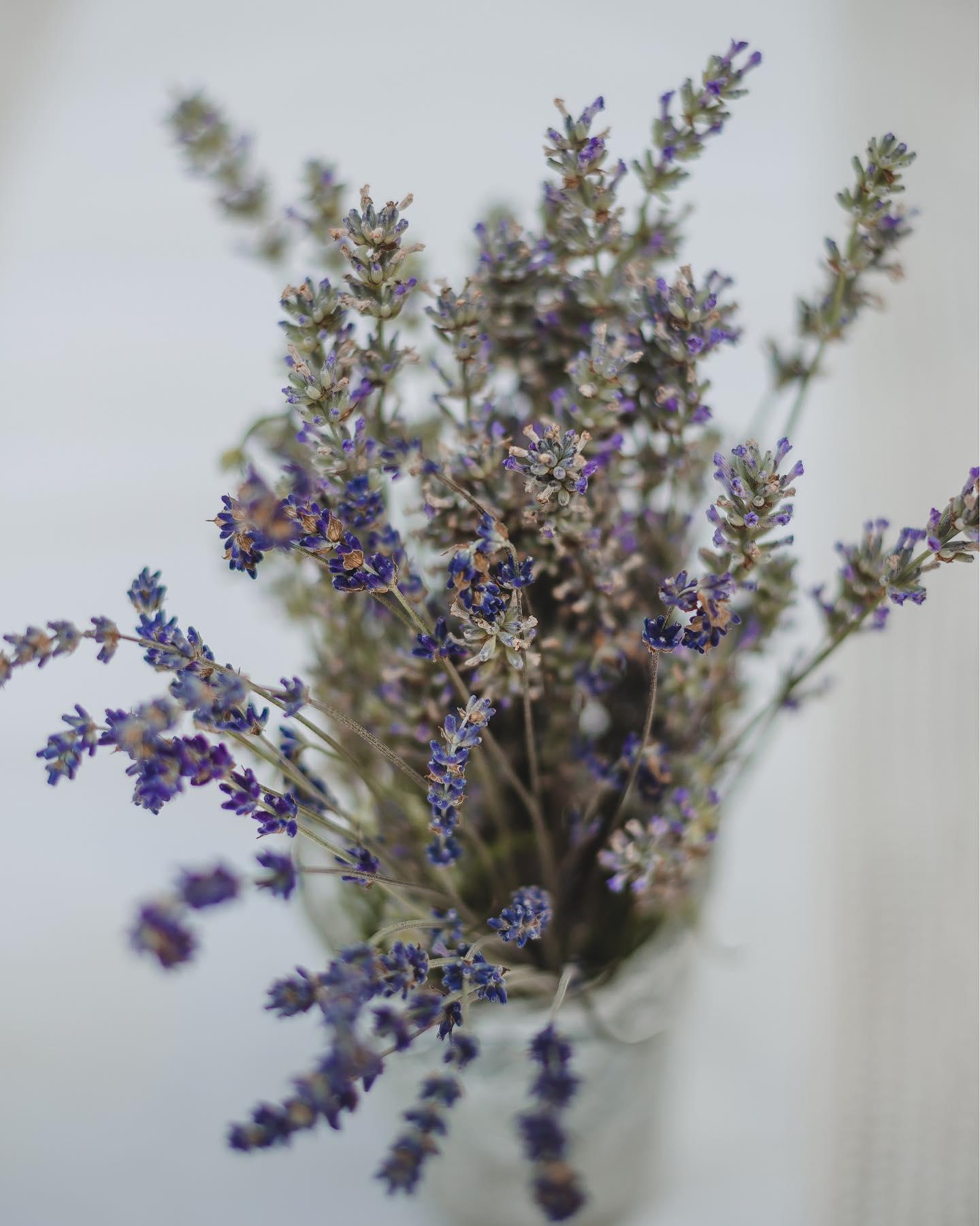 Upalnie dziś... #slow #mood 💜💜💜 #Bienkovska #lavender #BienkovskaLavender